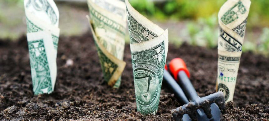 money growing from the ground